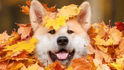 夏未尽秋已至,天凉好个秋